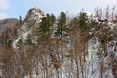 Roca en el bosque foto de archivo