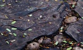 Roca en la tierra Fotos de archivo