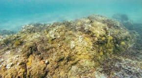 Roca en parte inferior de mar Fotos de archivo libres de regalías