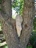 Roca en un árbol Fotografía de archivo
