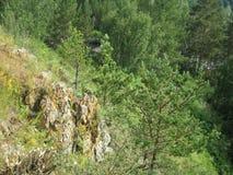 Roca entre los árboles Fotografía de archivo