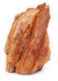 Roca fósil Foto de archivo libre de regalías