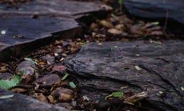 Roca grande en el groud para el fondo Imagen de archivo libre de regalías