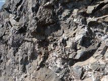 Roca metamórfica con las venas del cuarzo Fotografía de archivo libre de regalías