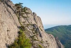 Roca plantada con los pinos crimeos Fotos de archivo libres de regalías