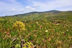 Roca przylądek & x28; Cabo da Roca& x29; krajobraz w Sintra Portugalia Zdjęcia Stock