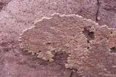 Roca sedimentaria roja con el cristal blanco en superficie Fotos de archivo libres de regalías