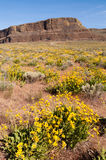 Roca Washington del este del barco de vapor de los Wildflowers Fotos de archivo
