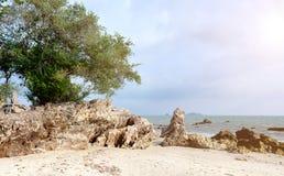 Roca y árbol en la playa Fotografía de archivo