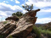 Roca y árbol inclinados Imagenes de archivo