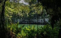 Roca y agua de la vegetación Imagen de archivo