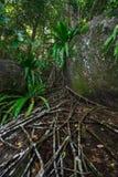 Roca y bosque Imagen de archivo libre de regalías