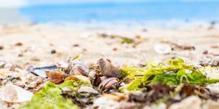 Roca y ostra laterales, musgo de la playa fotos de archivo
