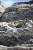 Roca y planta Imagen de archivo libre de regalías