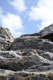 Roca y planta Imagen de archivo