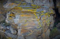 Roca y planta Fotos de archivo libres de regalías