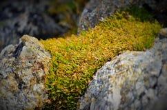 Roca y planta Fotografía de archivo