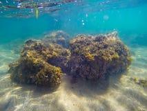 Rocas amarillas en un fondo marino arenoso en Cerdeña Fotografía de archivo