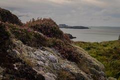 Rocas blancas cubiertas en liquen y el brezo de Bell púrpura hermoso imágenes de archivo libres de regalías