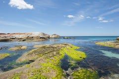 Rocas coloridas en la bahía del fuego Tasmania, Australia Fotos de archivo libres de regalías