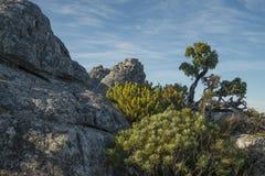 Rocas con la vegetación en la montaña de la tabla imagen de archivo