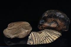 Rocas congregadas del sílex Foto de archivo libre de regalías