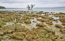Rocas coralinas Fotos de archivo