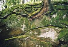 Rocas cubiertas con un musgo. Imágenes de archivo libres de regalías