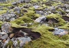 Rocas cubiertas de musgo de la lava en Islandia fotografía de archivo