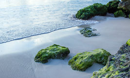 Rocas cubiertas de musgo en la arena blanca en la playa en Oistins Barbados Fotos de archivo