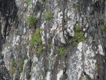 Rocas de Coastal del irlandés Imagen de archivo