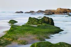 Rocas de la alga marina Fotos de archivo libres de regalías