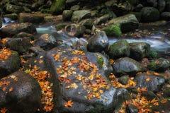 Rocas de la corriente con Autumn Leaves Imagen de archivo