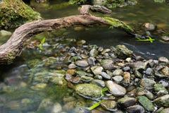 Rocas de la corriente de la rama Foto de archivo libre de regalías
