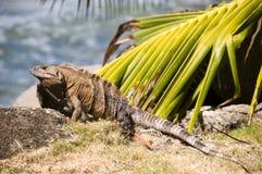 Rocas de la iguana por la playa America Central Imagen de archivo libre de regalías