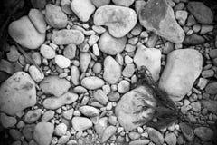 Rocas de la orilla del río de B&W Fotografía de archivo libre de regalías