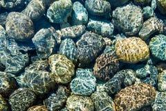 Rocas de la parte inferior del Océano Pacífico imagen de archivo