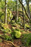 Rocas de las piedras en el bosque Imágenes de archivo libres de regalías