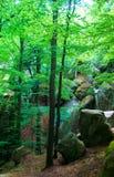 Rocas de los árboles forestales del paisaje Fotografía de archivo libre de regalías