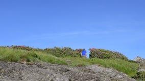 Rocas de Pan Right Man Walks Over y a través del rododendro metrajes