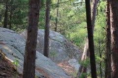 Rocas del bosque Foto de archivo libre de regalías