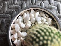Rocas del cactus fotografía de archivo libre de regalías