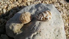 Rocas del mar en la orilla Fotos de archivo