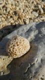 Rocas del mar en la orilla Foto de archivo libre de regalías