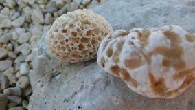 Rocas del mar en la orilla Imagen de archivo