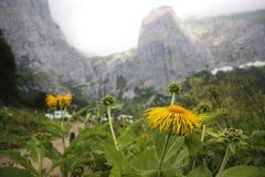 Rocas detrás de la flor Fotografía de archivo