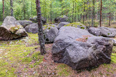 Rocas en bosque Foto de archivo