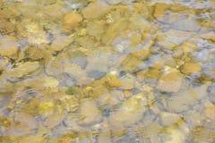 Rocas en corriente clara del agua Imagenes de archivo