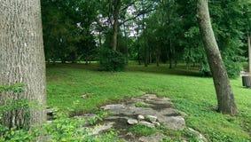 Rocas en el bosque Foto de archivo libre de regalías