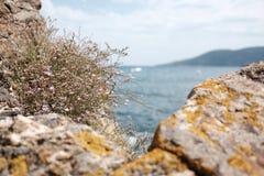 Rocas en un mar Imágenes de archivo libres de regalías
